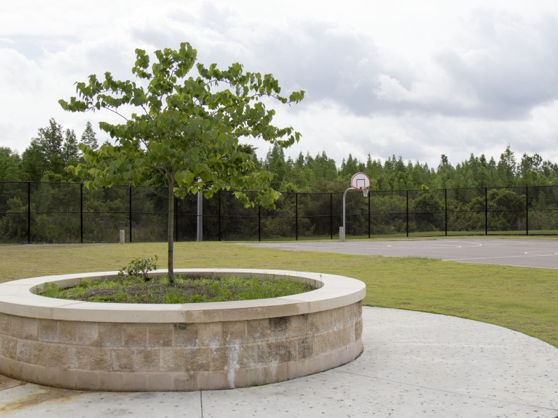 A tree in a planter near an outdoor basketball court